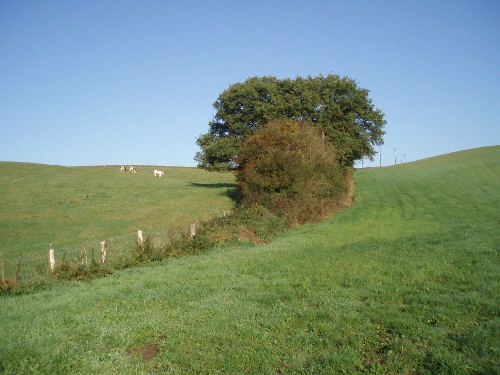 Le sentier de Basse-Laloux à l'angle du chemin no 4