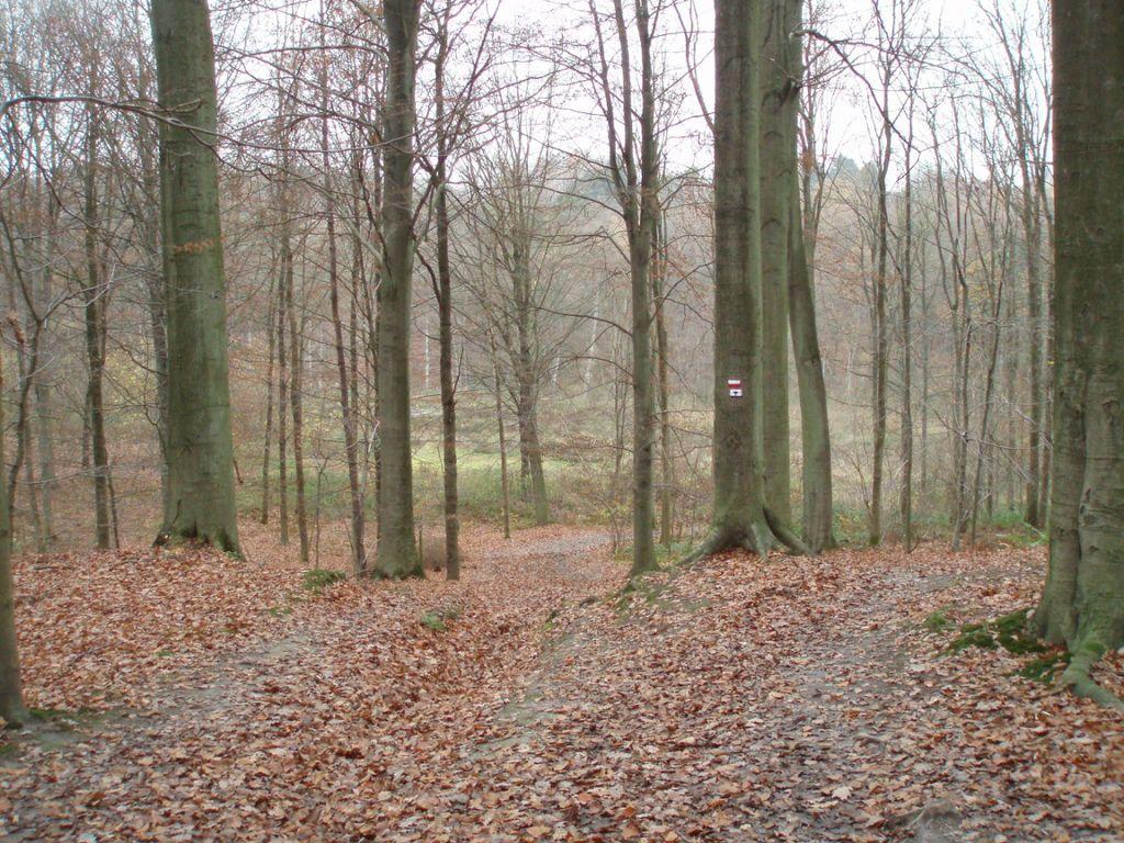 Le sentier du bois d'Hez (n° 85 à Baisy-Thy) dans le bois d'Hez