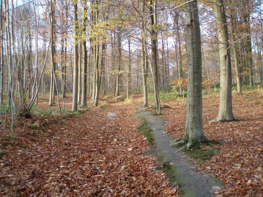 Le sentier de Chevelipont (n° 86 à Baisy-Thy) dans le bois d'Hez.