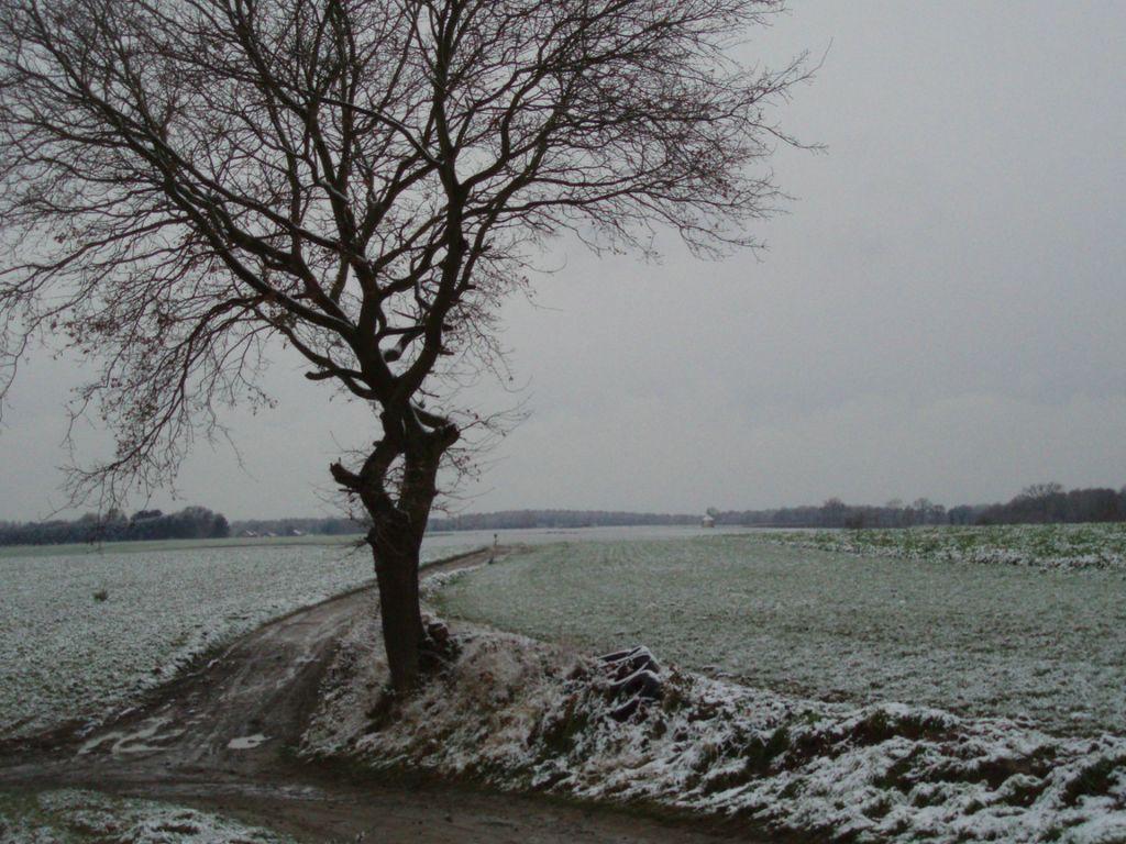 Le chemin de la chapelle du Try-au-Chêne (n° 6) à travers champs : arbre isolé au croisement des chemins