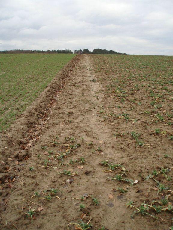 Sentier n° 44 : traversée d'un champ entre deux cultures