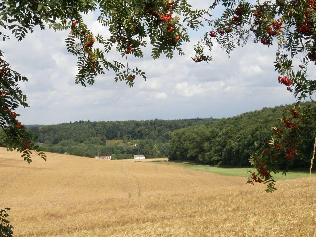 Panorama depuis le chemin du Grand Arbre : champs en avant-plan et forêts au loin