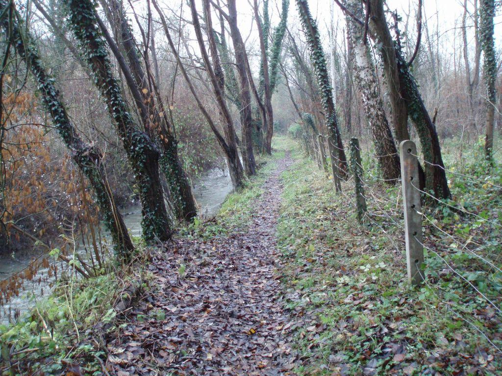 Le sentier des Marais du Moulin (n° 89) le long de la Dyle
