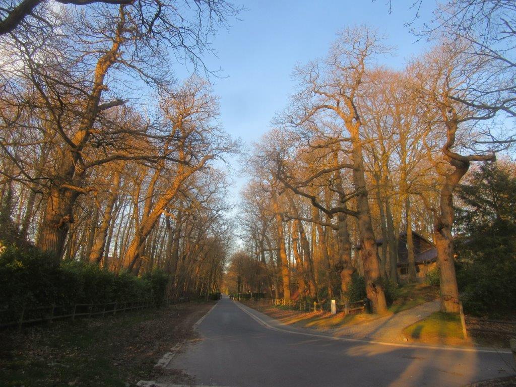 Drève des Châtaigniers dans le Bois de la Motte en mars 2020. Les arbres n'ont pas encore de feuilles